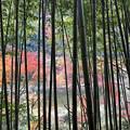 Photos: 愛岐トンネル群 秋の特別公開 IMG_1458_2