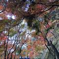 Photos: 愛岐トンネル群 秋の特別公開 IMG_1449_2