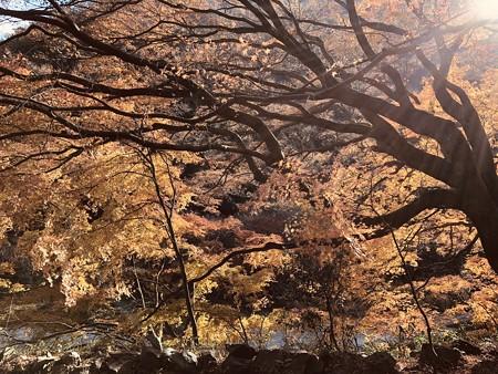 愛岐トンネル群 秋の特別公開 IMG_E1481
