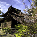 Photos: 虎渓山永保寺 国宝 観音堂と桜 IMG_6036-3