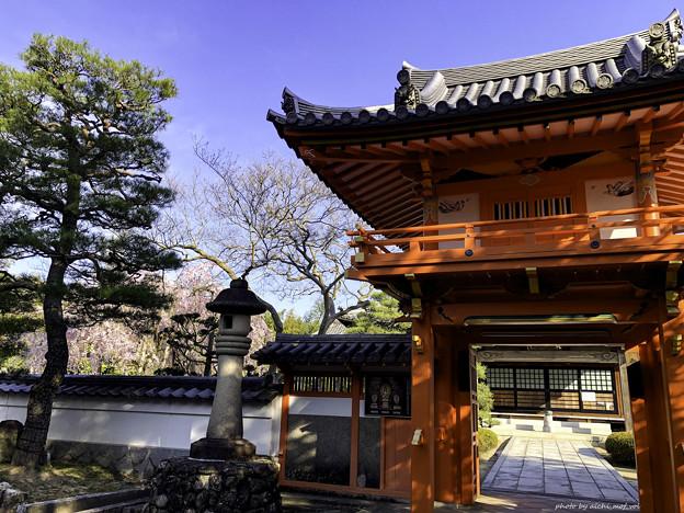 虎渓山永保寺 保寿院の枝垂れ桜 IMG_6035-3