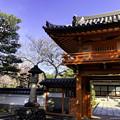 Photos: 虎渓山永保寺 保寿院の枝垂れ桜 IMG_6035-3