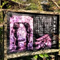 Photos: 虎渓山永保寺 国宝 観音堂 IMG_6056