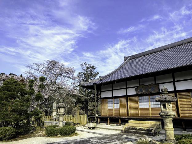 虎渓山永保寺 桜 IMG_6065-3