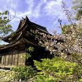 Photos: 虎渓山永保寺 桜  IMG_6063-3