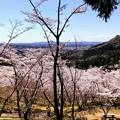 Photos: 桜@可児市 蘭丸ふる里の森 IMG_5968