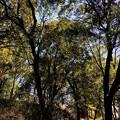 可児市 蘭丸ふる里の森 IMG_5967