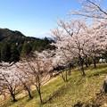 Photos: 桜@可児市 蘭丸ふる里の森 IMG_5978