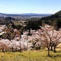 Photos: 桜@可児市 蘭丸ふる里の森 IMG_5973