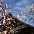 写真: 梅と空05