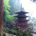Photos: 大杉