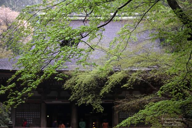Photos: 新緑の本堂