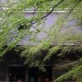 新緑の本堂