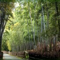 Photos: 竹の路