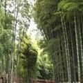 西山竹林の俤