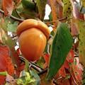 Photos: 今年の秋