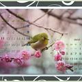 Photos: 如月カレンダー