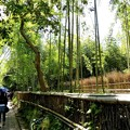 Photos: 竹林の路