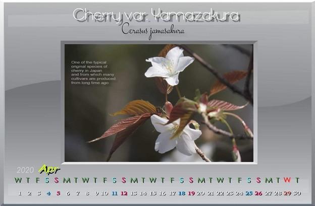 2020年卯月カレンダー