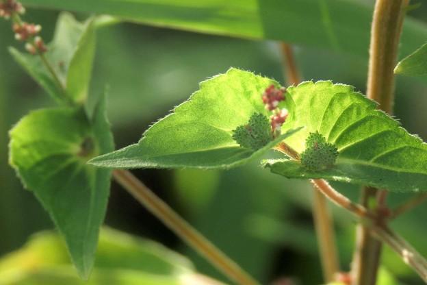 Photos: 不思議な植物