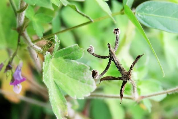 蜘蛛も変身?