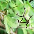 Photos: 蜘蛛も変身?
