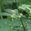 Photos: 掌状の葉が気になる植物