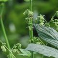 Photos: 万葉の植物