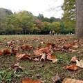 枯れ葉積む