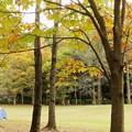 Photos: 栃の木