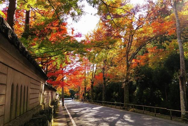 Photos: 紙屋川沿い