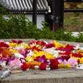 Photos: 水盤の花