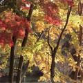 Photos: 錦繍