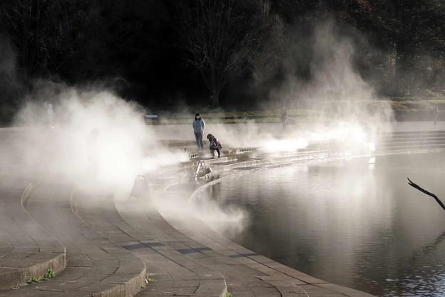 Photos: 霧の公園