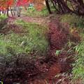 Photos: もじみ川