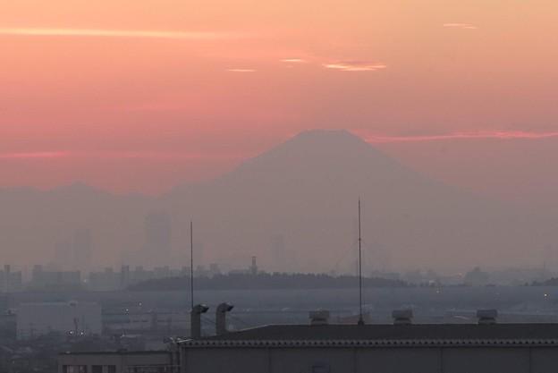 Photos: 火灯し頃