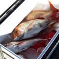 Photos: 鯛漁だい!