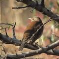 Photos: よく似た鳥
