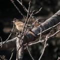 Photos: 桜の枝へ