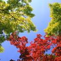 写真: 空に映える