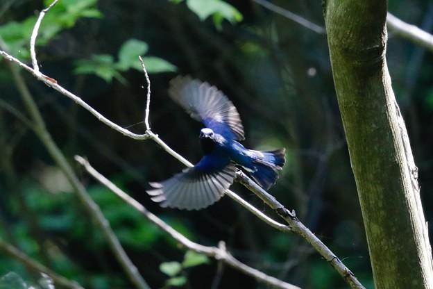 Photos: 九州の夏鳥