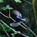 写真: 九州の夏鳥