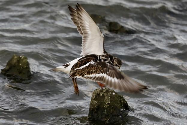 Photos: 渡り鳥
