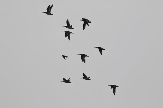 秋の渡り鳥