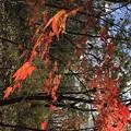 写真: ウトナイ湖の秋