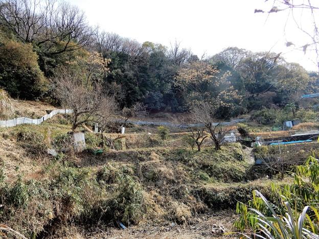墓参・山裾の径 (1)