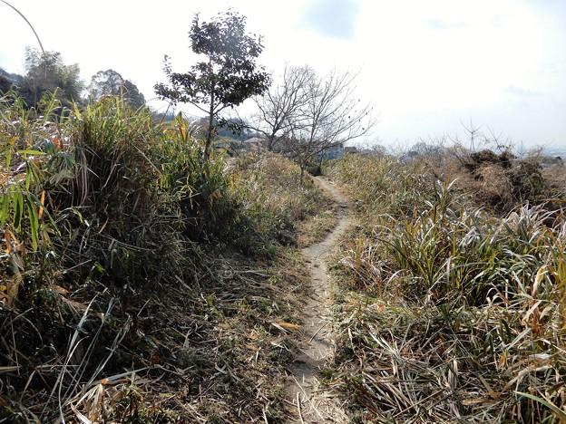 墓参・山裾の径 (3)