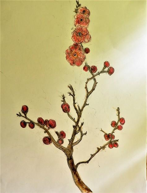 梅の花(模写) (1)