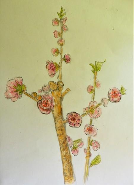 梅の花(模写) (2)