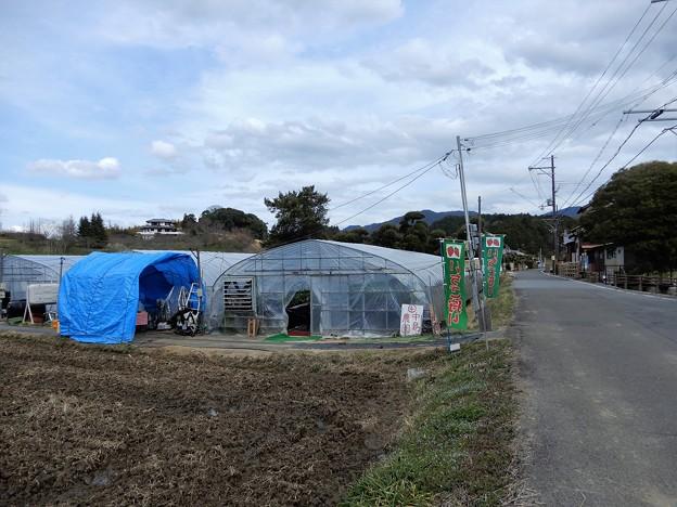 中島農園 (1)